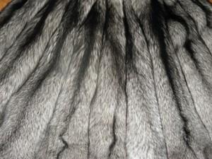 Лиса финская серебристо-чёрная
