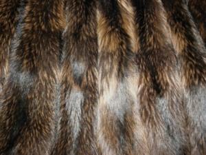 енот собака светло-коричневый